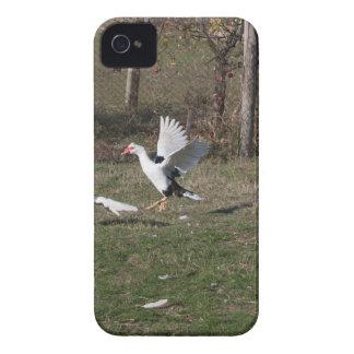 Capa Para iPhone 4 Case-Mate Luta dos gansos