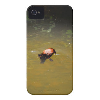 CAPA PARA iPhone 4 Case-Mate  PARQUE AUSTRÁLIA DE PLATYPUS EUNGELLA NATIOANL