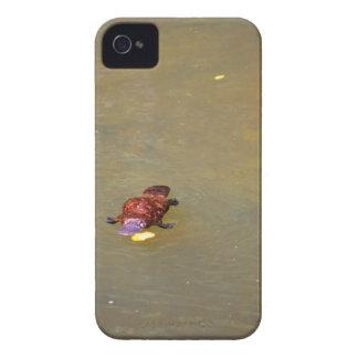 CAPA PARA iPhone 4 Case-Mate  PARQUE NACIONAL AUSTRÁLIA DE PLATYPUS EUNGELLA