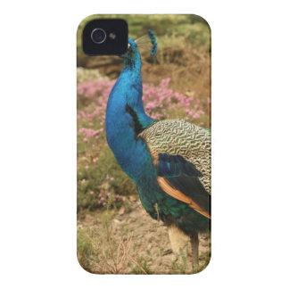 Capa Para iPhone 4 Case-Mate Pavão do verde azul e da laranja