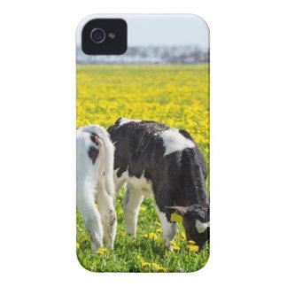 Capa Para iPhone 4 Case-Mate Três calfs recém-nascidos no prado dos