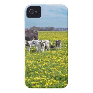 Capa Para iPhone 4 Case-Mate Vaca com as vitelas que pastam no prado com