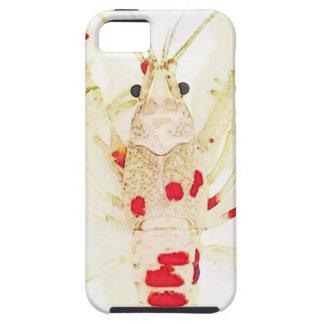 Capa Para iPhone 5 15873579_1416330921732017_2539621766324574947_n.jp