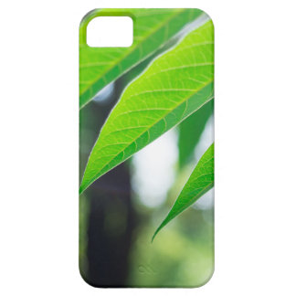 Capa Para iPhone 5 Ailanthus Defocused e borrado do ramo