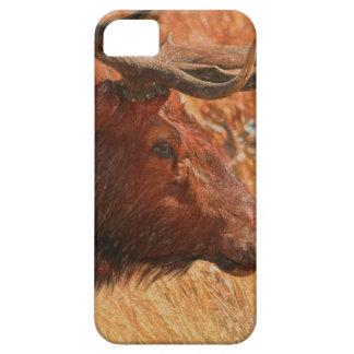 Capa Para iPhone 5 Alces de Bull