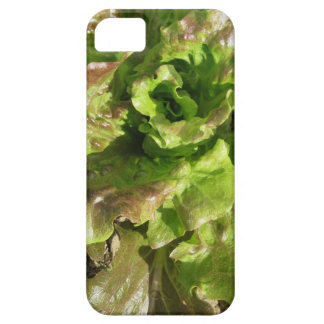 Capa Para iPhone 5 Alface fresca que cresce no campo. Toscânia,
