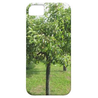 Capa Para iPhone 5 Árvore de pera com folhas do verde e frutas