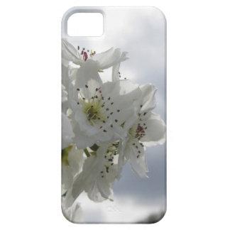 Capa Para iPhone 5 Árvore de pera de florescência contra o céu
