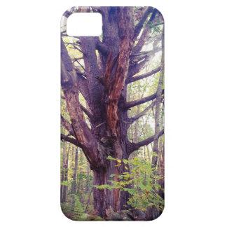 Capa Para iPhone 5 Árvore enevoada