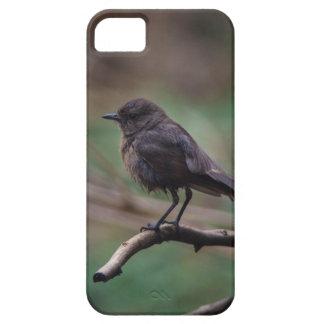Capa Para iPhone 5 Beleza do pássaro