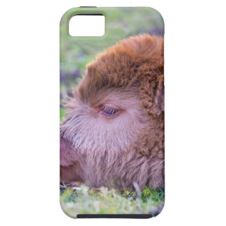 Capa Para iPhone 5 Cabeça da vitela escocesa recém-nascida marrom do