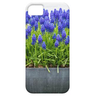 Capa Para iPhone 5 Caixa cinzenta da flor do metal com os jacintos de
