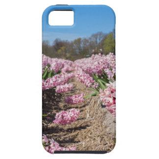 Capa Para iPhone 5 Campo de flores com os jacintos cor-de-rosa em
