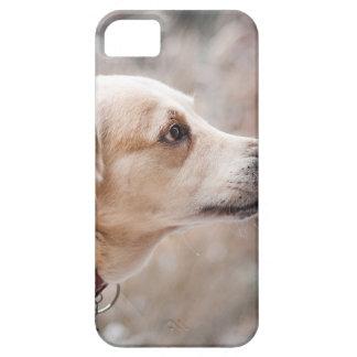 Capa Para iPhone 5 cão