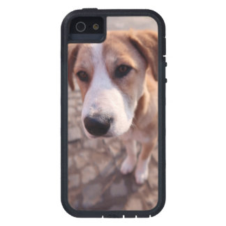 Capa Para iPhone 5 Cão disperso