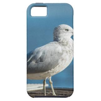 Capa Para iPhone 5 Chame-me M.Seagull