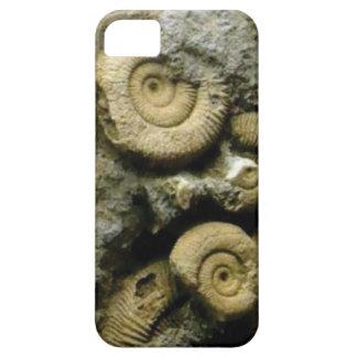 Capa Para iPhone 5 círculos de caracóis fósseis