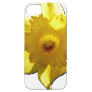 Capa Para iPhone 5 Daffodil 1,0 da trombeta amarela