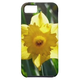 Capa Para iPhone 5 Daffodil amarelo 03.0.g