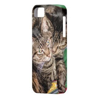 Capa Para iPhone 5 Dois gatos que Snuggling