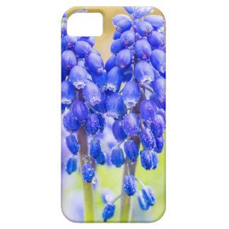 Capa Para iPhone 5 Dois jacintos de uva azuis no primavera