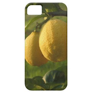 Capa Para iPhone 5 Dois limões maduros que penduram na árvore