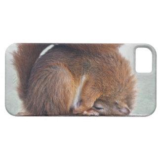Capa Para iPhone 5 Exemplo da case mate do iPhone 5 do esquilo de