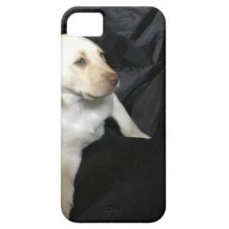 Capa Para iPhone 5 Filhote de cachorro amarelo Sadie do laboratório