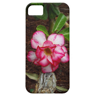 Capa Para iPhone 5 Flor cor-de-rosa