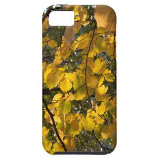Capa Para iPhone 5 Folhas de outono amarelas e verdes