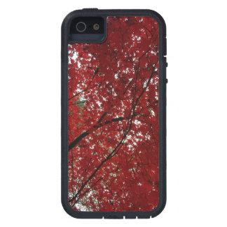 Capa Para iPhone 5 Folhas de outono vermelhos marrom do Outono da