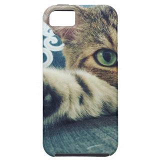 Capa Para iPhone 5 Gato de gato malhado bonito com olhos verdes