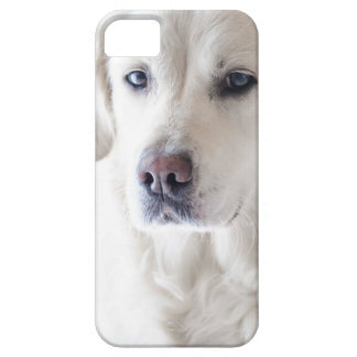 Capa Para iPhone 5 Golden retriever claro