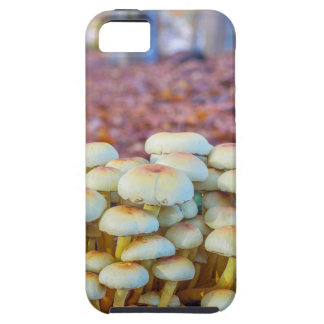 Capa Para iPhone 5 Grupo de cogumelos na floresta da faia da queda