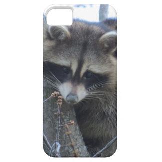 Capa Para iPhone 5 Guaxinim
