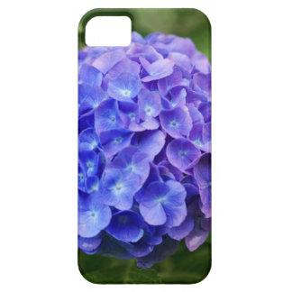 Capa Para iPhone 5 Hydrangea francês (macrophylla do Hydrangea)