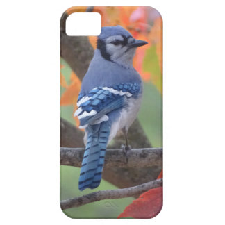 Capa Para iPhone 5 Jay azul