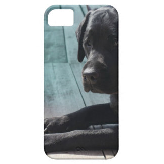 Capa Para iPhone 5 Labrador retriever preto customizável
