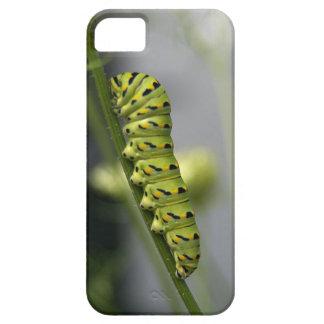 Capa Para iPhone 5 Lagarta preta do swallowtail (parsleyworm) em Dil