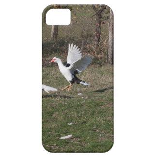 Capa Para iPhone 5 Luta dos gansos