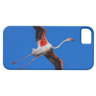 Capa Para iPhone 5 Maior flamingo, roseus do phoenicopterus