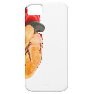 Capa Para iPhone 5 Modelo humano do coração no fundo branco