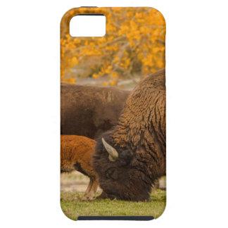 Capa Para iPhone 5 Nação da família do bisonte