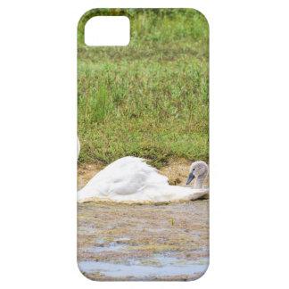 Capa Para iPhone 5 Natação branca da cisne da mãe na linha dos