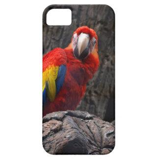 Capa Para iPhone 5 O Ara do animal de estimação de Papużka do pássaro