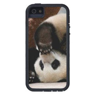 Capa Para iPhone 5 Pandas do bebê que jogam - panda bonito da panda