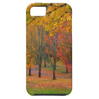 Capa Para iPhone 5 Parque com as árvores de bordo alinhadas árvore no