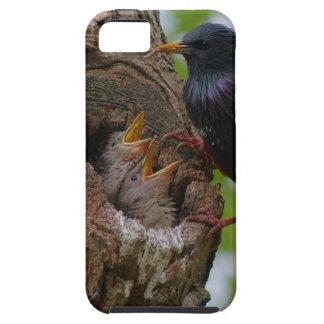Capa Para iPhone 5 pássaro