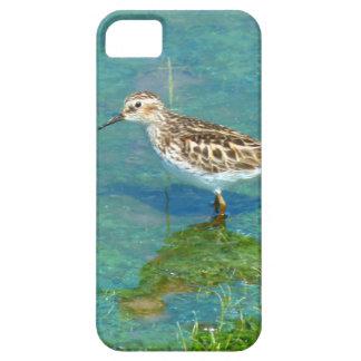 Capa Para iPhone 5 pássaros