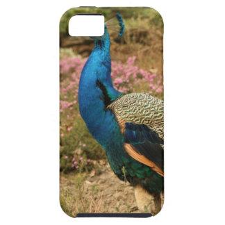 Capa Para iPhone 5 Pavão do verde azul e da laranja